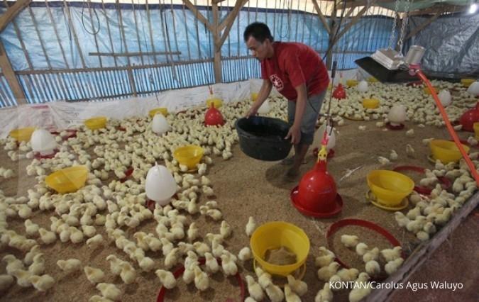 Pemangkasan produksi DOC tak angkat harga telur