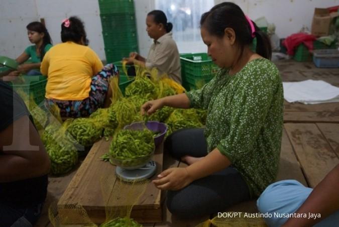 ANJT Harga CPO hambat kinerja Austindo Nusantara (ANJT) di kuartal III