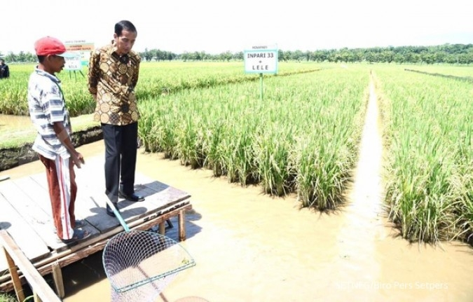 KKP: Potensi lahan minapadi mencapai 4,9 juta ha