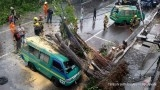 Home Ministry rejects Jakarta fund for fallen tree compensation