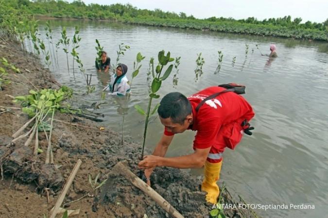 Pemerintah rilis regulasi perbaikan hutan mangrove