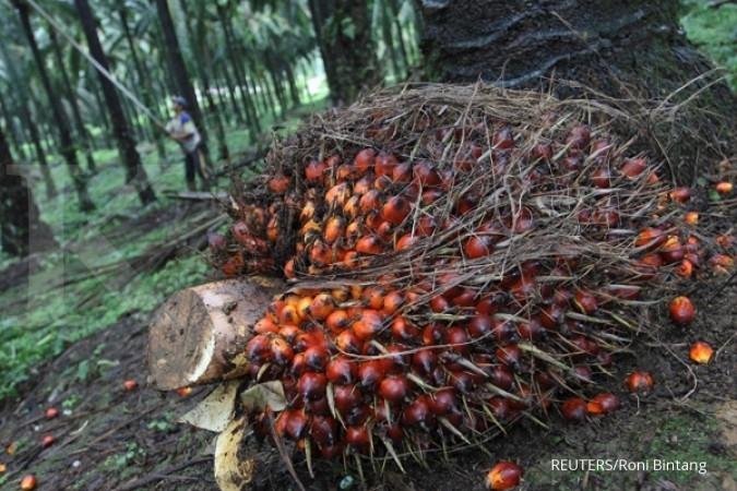SSMS AEON syaratkan sertifikat RSPO, bagaimana nasib emiten kelapa sawit?