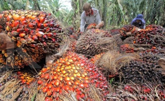 Replanting tingkatkan motivasi petani sawit