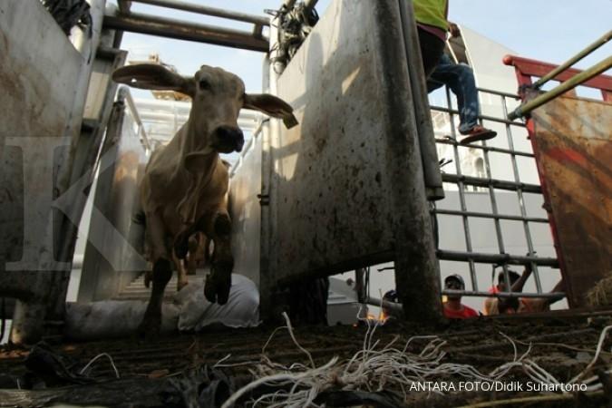 Kemtan target realisasi impor daging 75.200 ton