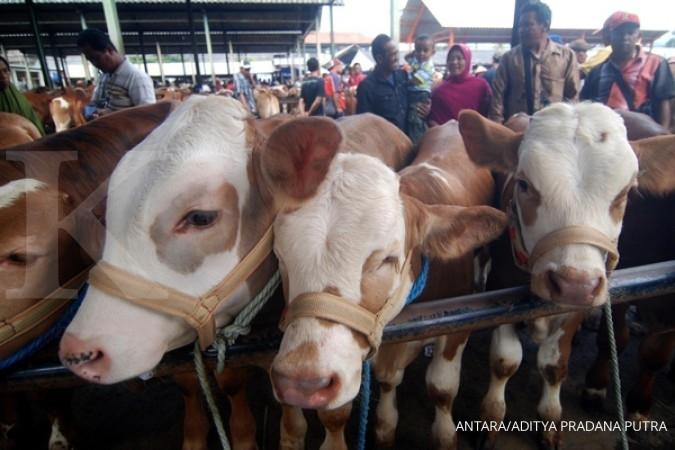 Kemtan alokasikan Rp 1 triliun untuk sapi lokal