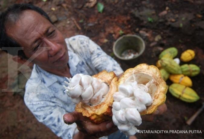 UE ada bea masuk, eksportir kakao cari pasar lain