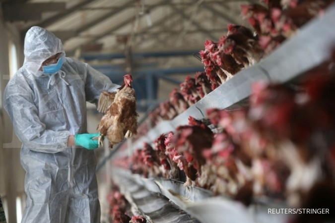Asia tolak impor unggas dan telur dari Amerika