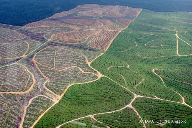 Lahan perkebunan sawit bukan dari kawasan hutan