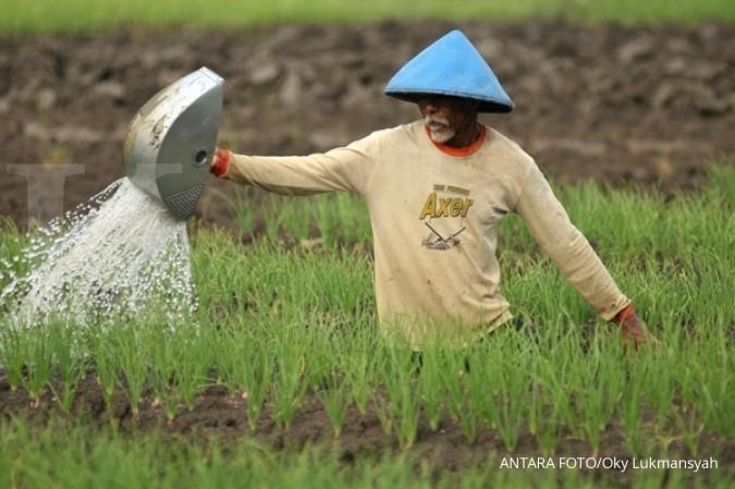Pertani - Kemtan produksi 7.000 bibit bawang putih