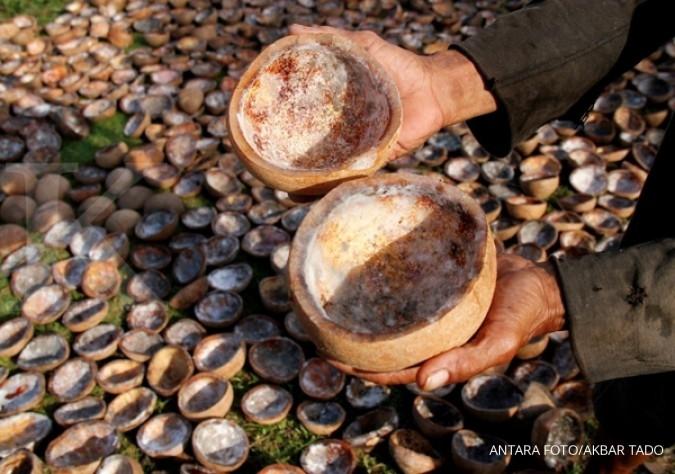 Kurang kelapa, tata niaga diusulkan