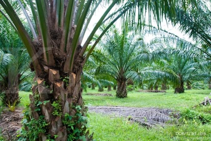 BPDP siapkan program dana abadi kelapa sawit