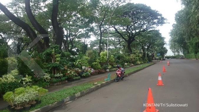 Yuk, berburu tanaman di Gelora Bung Karno (1)
