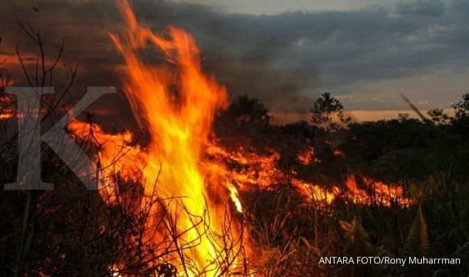 Kebakaran hutan di Portugal, 19 warga tewas