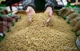 China drops import tariffs on feed ingredients from Asian neighbours
