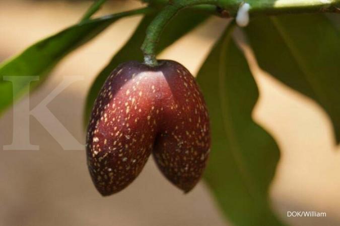 Tumbuh liar di hutan, cinta sulit dibudidaya (2)