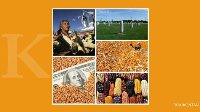 5 Negara konsumen jagung terbesar di Dunia