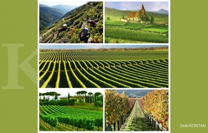 5 Negara penghasil anggur terbesar di dunia