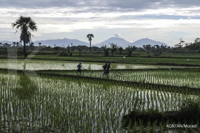 Darmin dorong petani mampu berorientasi pasar