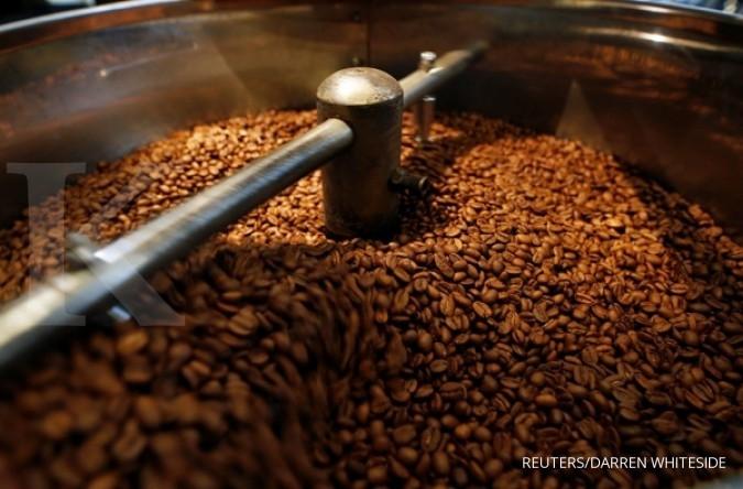 Produksi kopi di Solok menurun drastis