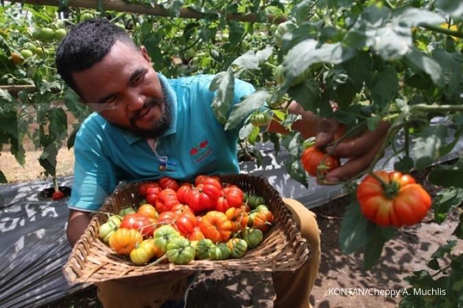 Apel dan tomat bisa perbaiki paru-paru eks perokok