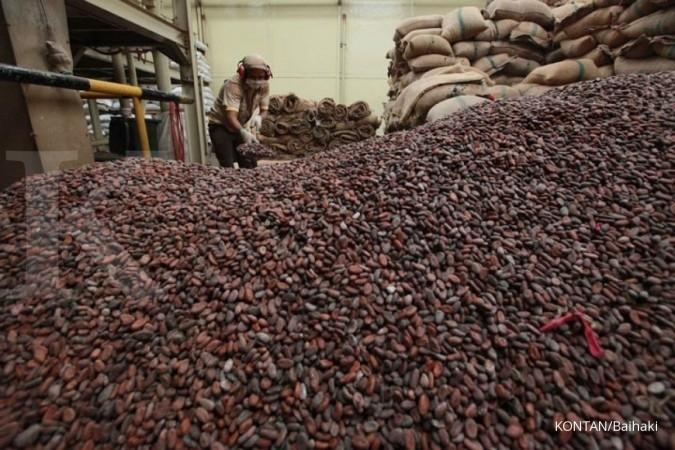 Askindo: Produksi kakao 2017 hanya 300 ribu ton