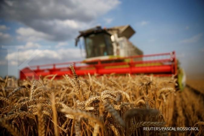 Pengusaha pakan: Impor gandum untuk pakan ternak jauh lebih rendah