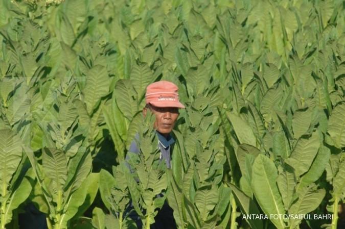 Data beleid impor tembakau dinilai tak akurat