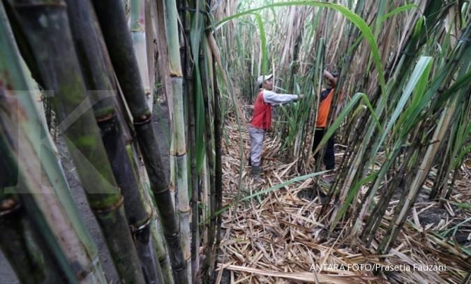 Industri tak terdampak penahanan gula oleh petani