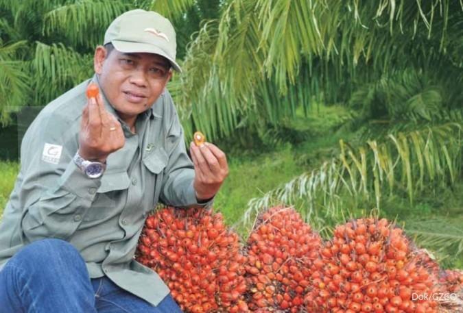 Harga CPO masih tertekan, Gozco Plantations (GZCO) genjot produksi