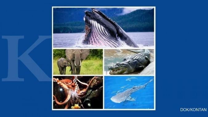 5 Hewan terberat yang masih hidup di dunia