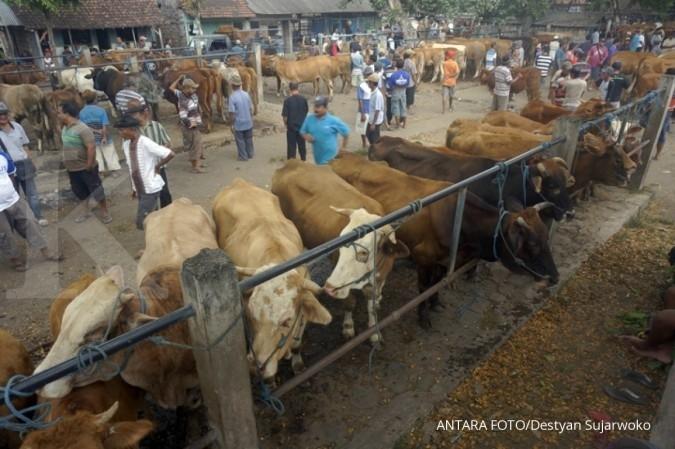 Kebutuhan sapi kurban tahun ini naik 10%