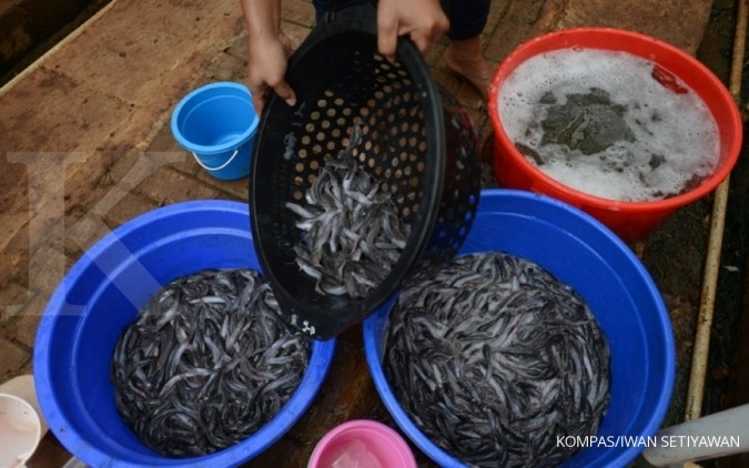 AP5I: Ekspor perikanan turun 15% di era Jokowi