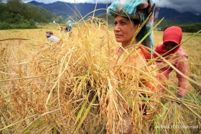 Pembahasan HET beras masih alot
