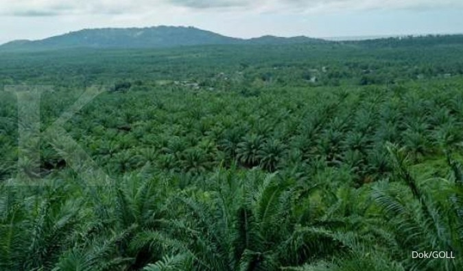 GOLL Dua anak usaha pailit, Golden Plantation (GOLL) cari investor baru