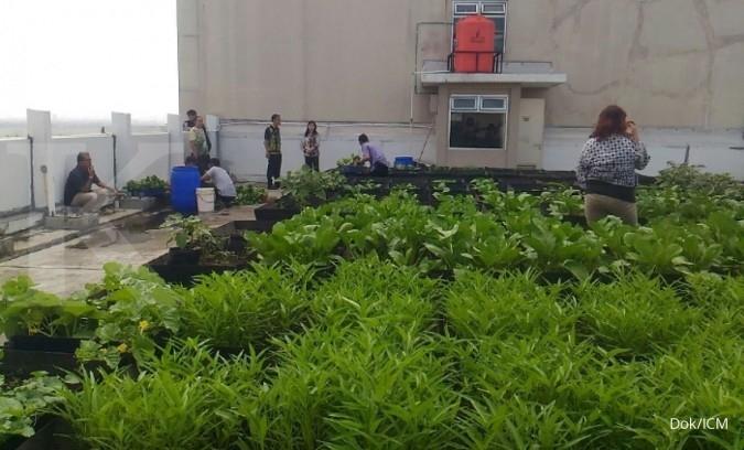 Urban farming, cocok tanam ala penghuni apartemen