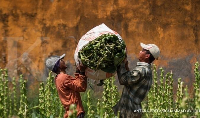 Pembatasan impor tembakau justru jadi kompor (2)