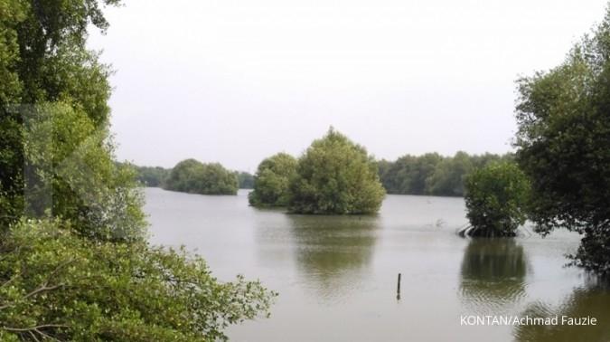 Alasan target perbaikan mangrove di tahun 2045