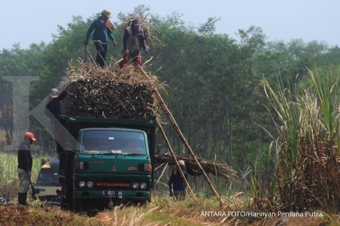 Penghapusan PPN belum cukup bagi petani tebu