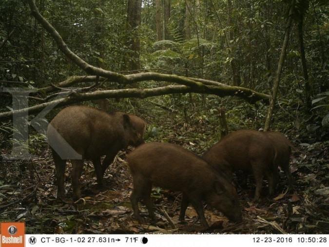 IBC: Anggaran ideal proyek hutan sosial Rp 3,98 T