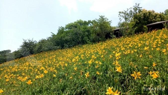 Bunga dan buah 'bercerita' di negeri Formosa (1)