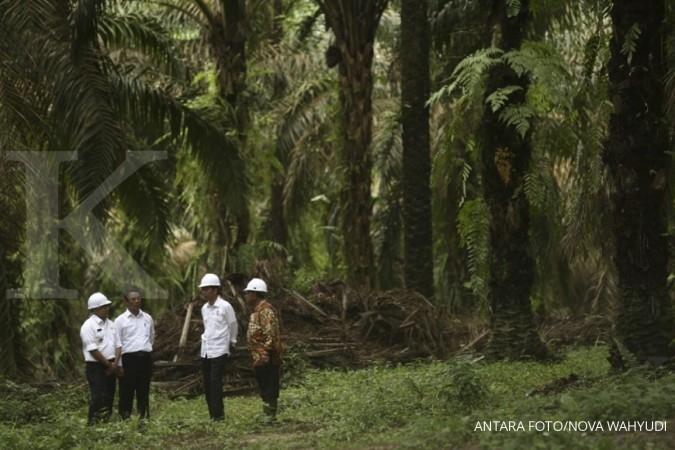 Pemerintah akan beri sertifikat kebun sawit rakyat