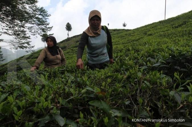 ITMA Indonesia upayakan India dan China investasi teknologi pengolahan teh di Indonesia
