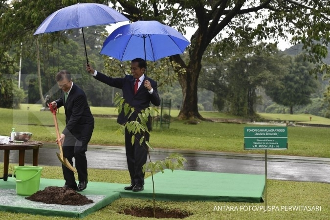 Jokowi payungi Presiden Korsel saat tanam pohon