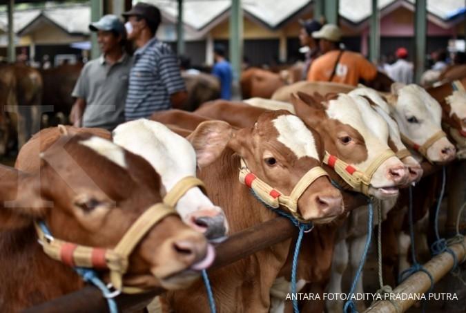 Respon industri atas larangan antibiotik ternak