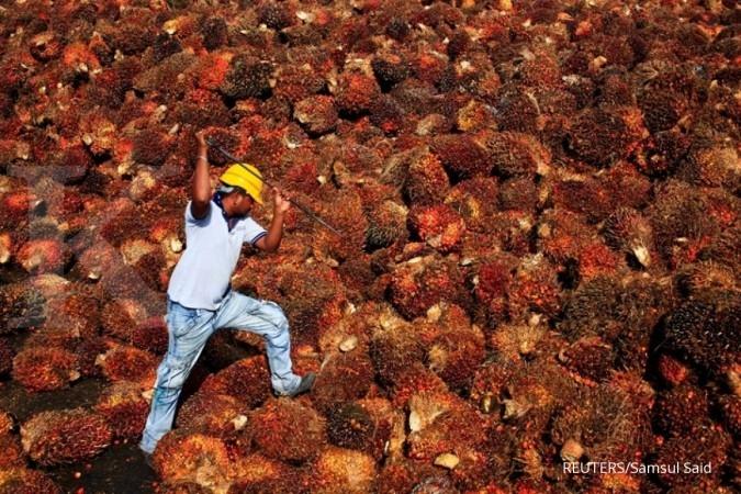 Kampanye negatif tak pengaruhi produksi sawit