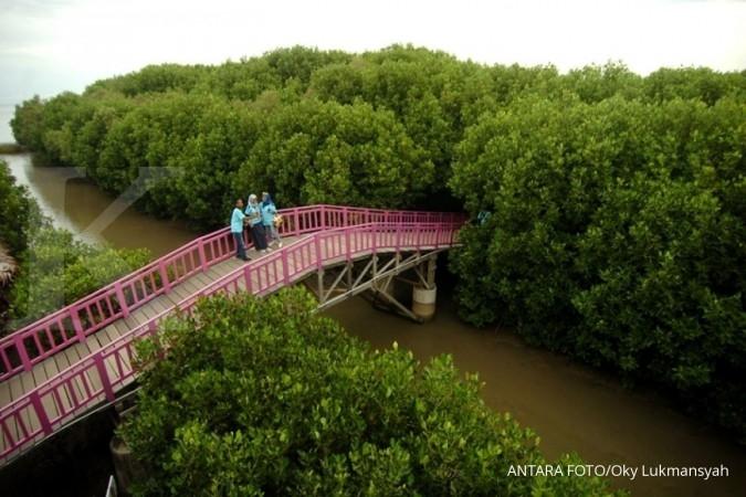 Franky: Mangrove punya nilai ekonomi yang besar