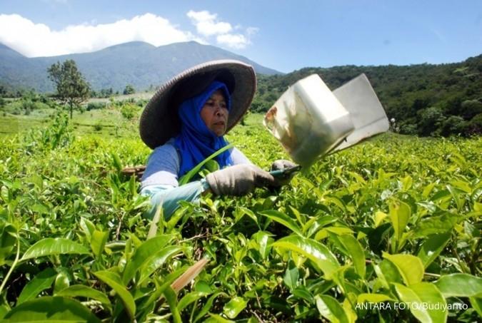 Indonesia advokasi teh ke Eropa