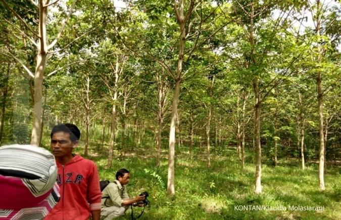 Cerita petani Tebing Siring raih IUP Perhutanani