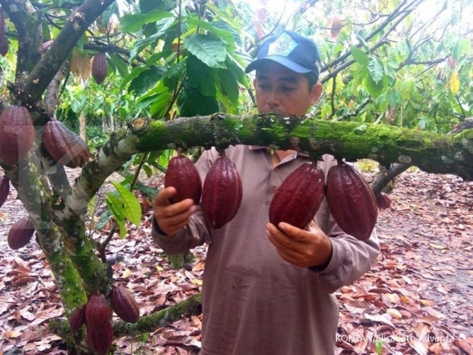 Produktivitas petani kakao lokal harus digenjot
