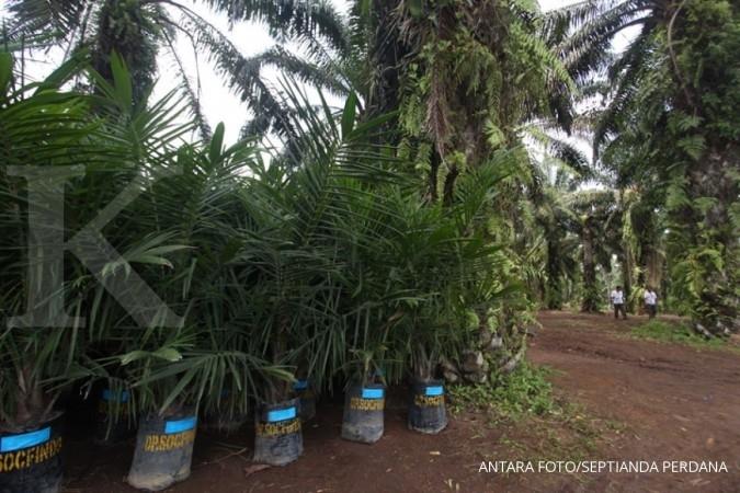 Asosiasi Petani Kelapa Sawit minta kemudahan sertifikasi lahan